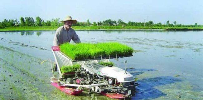 نشاء مکانیزه برنج در شالیزار های رضوانشهر آغاز شد